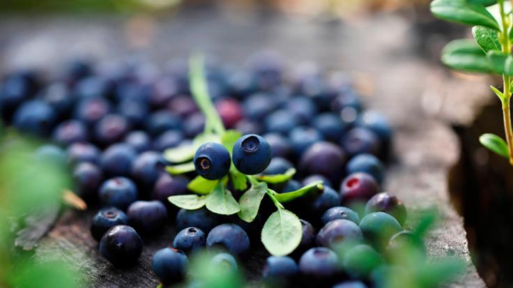 Finnish bilberries.