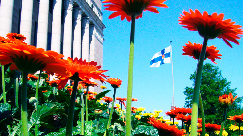 Orange flowers, the Finnish Parliament house and a Finnish flag flying in the background.