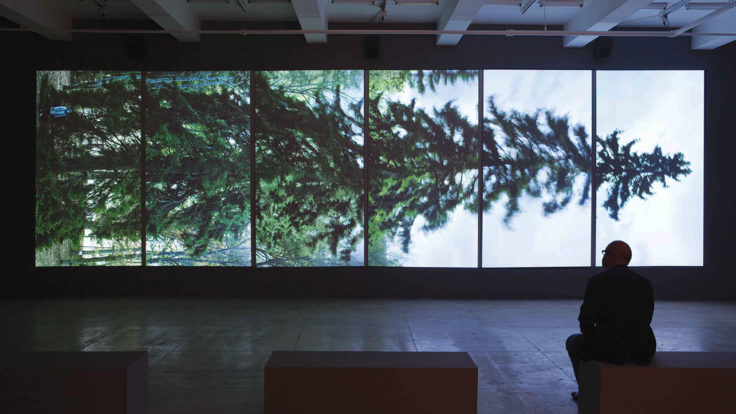 An installation formed of six screens showing a horizontal image of a spruce and a man watching it.