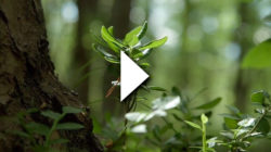 A forest with leaves in the foreground. A video play button on top.