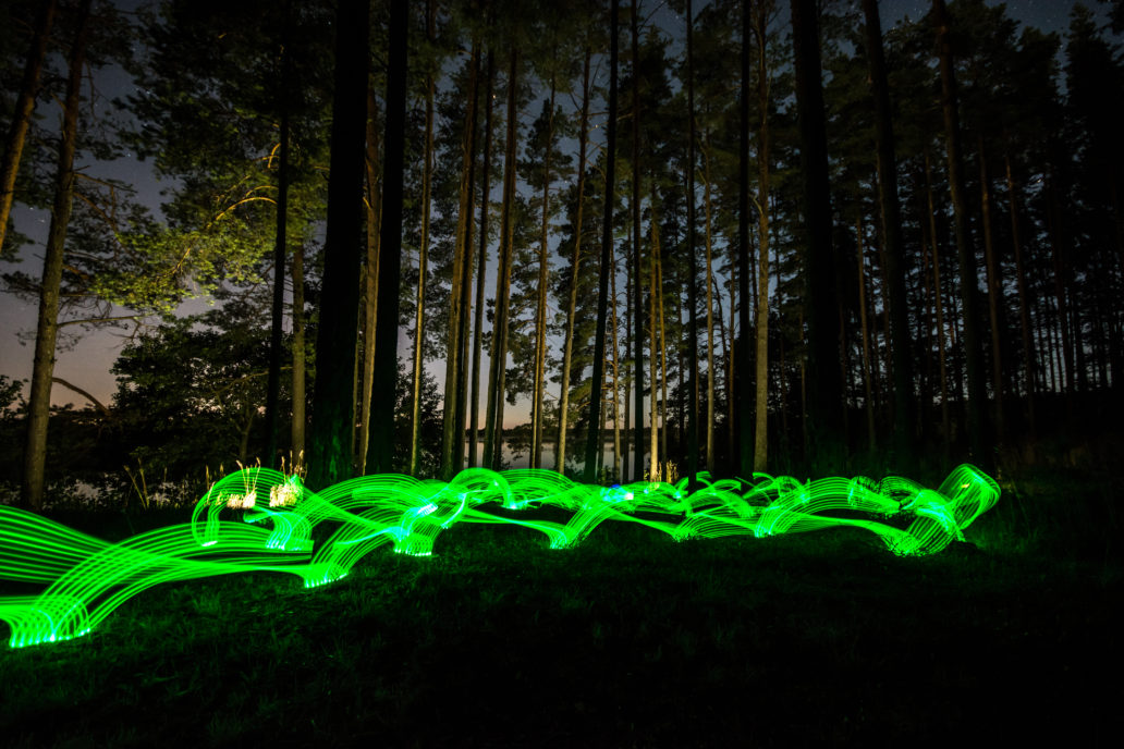 Green lights in a forest.