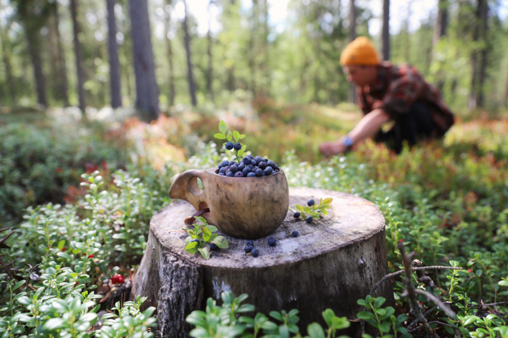 A picture of a cup full of blueberries and a person on the background picking blueberries in a forest